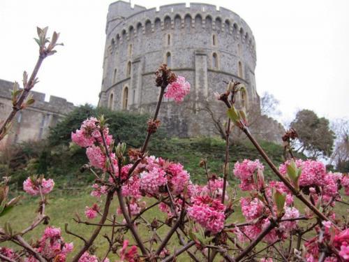 42. Windsor in spring