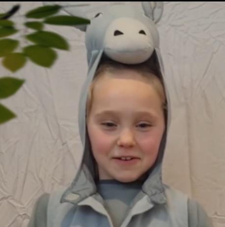 Alice - Donkey